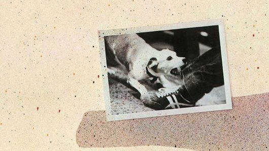 Tusk: Behind Fleetwood Mac's Album Of Elephantine Excess